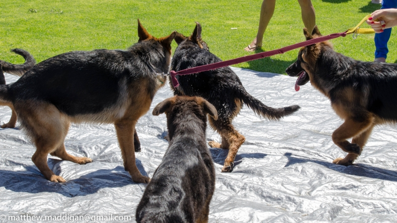 Puppy-Day-2016-54-of-70