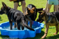 Puppy-Day-2016-57-of-70