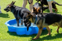 Puppy-Day-2016-59-of-70